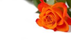 La naranja subió Imagen de archivo libre de regalías
