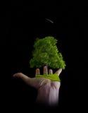 La natura è nelle mani dell'uomo fotografia stock
