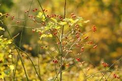 La natura in autunno a Meteora è un'attrazione turistica in più per la sua bellezza ed i suoi colori affascinanti fotografie stock libere da diritti