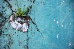 La natura combatte il fondo retro- Fotografia Stock