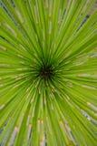 La natura così bella la perfezione ha concentrato della crescita fotografia stock libera da diritti