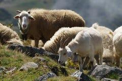 La natura dell'Abkhazia fotografie stock libere da diritti