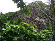 La natura dell'isola Phi Phi thailand Fotografia Stock Libera da Diritti