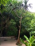 La natura dell'isola Phi Phi thailand Fotografia Stock