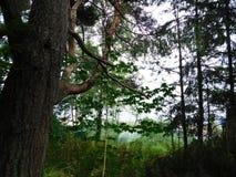 La natura della penisola soikinsky Fotografia Stock