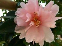 La natura di bellezza; il fiore Fotografie Stock Libere da Diritti