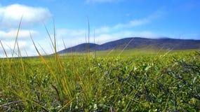 La natura di Chukotka in tundra e colline di estate Immagine Stock