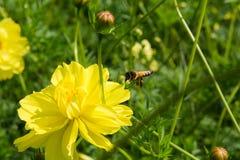 La natura di foraggiamento dell'ape Immagine Stock Libera da Diritti