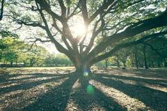 La natura ed il tramonto del landscapse in parco Immagini Stock Libere da Diritti