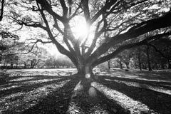 La natura ed il tramonto del landscapse in parco Fotografie Stock Libere da Diritti