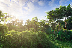 La natura ed il tramonto del landscapse in parco Fotografia Stock Libera da Diritti