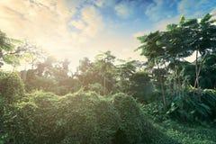 La natura ed il tramonto del landscapse in parco Immagine Stock Libera da Diritti