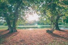 La natura ed il tramonto perfetti in parco Immagini Stock