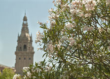 La natura fiorisce le fioriture dell'estate del astle del  di Ñ Fotografie Stock Libere da Diritti