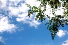 La natura lascia a cielo la bella vista Fotografia Stock Libera da Diritti
