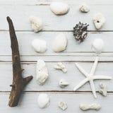 La natura naturale della spiaggia delle stelle marine della conchiglia delle coperture libera il concetto Fotografie Stock Libere da Diritti