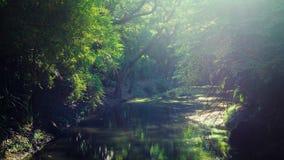La natura perfetta ed il grande albero in parco Immagine Stock