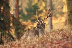 La natura selvaggia della repubblica Ceca Bella foto animale Immagine Stock