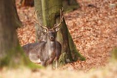 La natura selvaggia della repubblica Ceca Bella foto animale Immagini Stock
