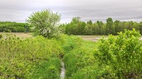 La natura sta svegliando in primavera Fotografie Stock