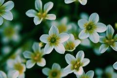 la natura verde di bellezza fiorisce la macro fotografia stock