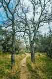 La natura vi invita per una passeggiata Immagini Stock