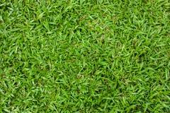 La naturaleza ajardina la hierba verde Imagenes de archivo