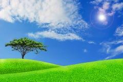 La naturaleza ajardina la hierba verde y el cielo azul Fotos de archivo libres de regalías