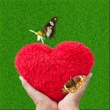 La naturaleza ajardina la hierba verde y el corazón rojo Fotos de archivo libres de regalías