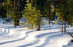 La naturaleza Altaya satisface el ojo Imágenes de archivo libres de regalías