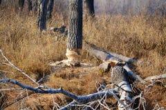 La naturaleza Altaya satisface el ojo Foto de archivo libre de regalías