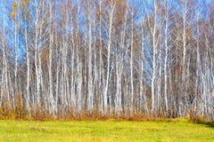 La naturaleza Altaya satisface el ojo Fotografía de archivo libre de regalías