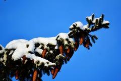 La naturaleza Altaya satisface el ojo Imagen de archivo