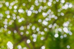 La naturaleza boken las hojas borrosas del verde del árbol Foto de archivo