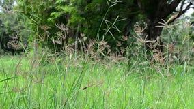 La naturaleza contiene la ocsilación de la hierba y el sonido de insectos y de pájaros metrajes