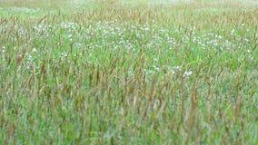 La naturaleza contiene la ocsilación y la sol de la hierba Ningún sonido almacen de metraje de vídeo