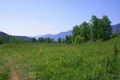 La naturaleza de Altai Foto de archivo libre de regalías