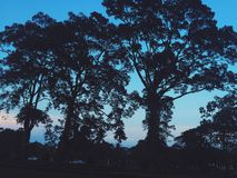La naturaleza de Camboya Foto de archivo libre de regalías