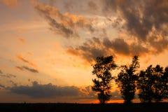 La naturaleza de los árboles Fotografía de archivo