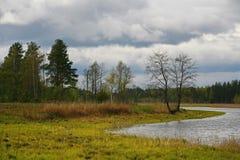 La naturaleza de Rusia septentrional ajardine con el bosque, el río, el terreno de aluvión del río y el prado ripícola Árbol soli Imagen de archivo
