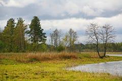 La naturaleza de Rusia septentrional ajardine con el bosque, el río, el terreno de aluvión del río y el prado ripícola Árbol soli Imagenes de archivo