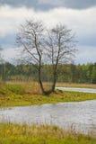 La naturaleza de Rusia septentrional ajardine con el bosque, el río, el terreno de aluvión del río y el prado ripícola Árbol soli Fotografía de archivo libre de regalías