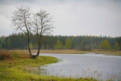 La naturaleza de Rusia septentrional ajardine con el bosque, el río, el terreno de aluvión del río y el prado ripícola Fotos de archivo libres de regalías