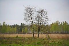 La naturaleza de Rusia septentrional ajardine con el bosque, el río, el terreno de aluvión del río y el prado ripícola Foto de archivo