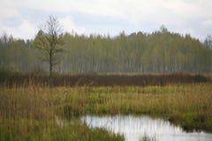 La naturaleza de Rusia septentrional ajardine con el bosque, el río, el terreno de aluvión del río y el prado ripícola Fotografía de archivo