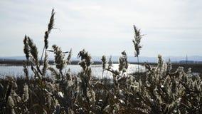 La naturaleza del otoño de Siberia Foto de archivo libre de regalías