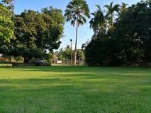 La naturaleza es siempre hermosa ?rbol de hierba verde fotografía de archivo libre de regalías