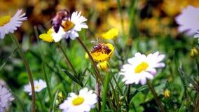 La naturaleza está despertando en la estación de primavera Imágenes de archivo libres de regalías