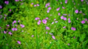La naturaleza está despertando en la estación de primavera Fotos de archivo