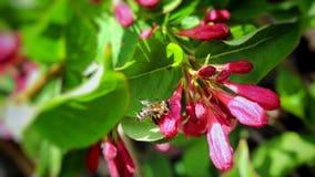 La naturaleza está despertando en la estación de primavera Fotografía de archivo